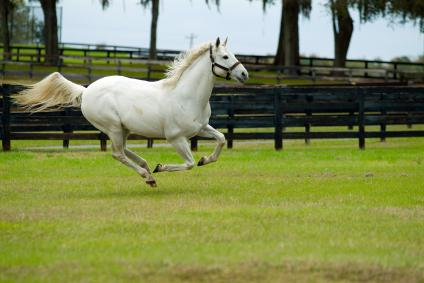 white horse running through field